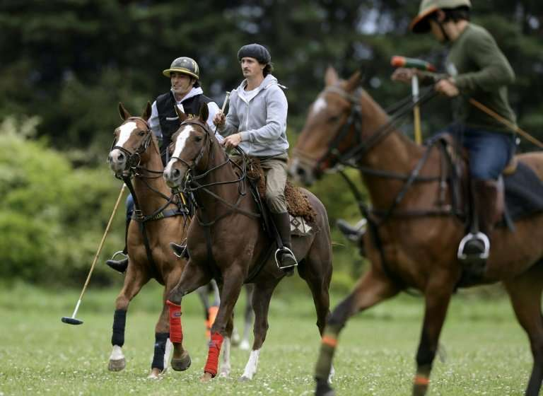 """Argentinian polo horse trainer Ezequiel Correa (C) said, """"If you expose a horse to polo before it's ready, you traumatize i"""
