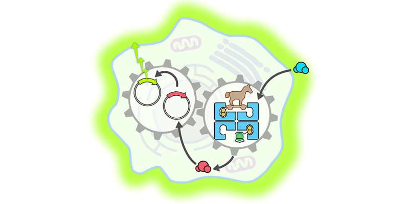 Artificial enzyme can activate a gene switch