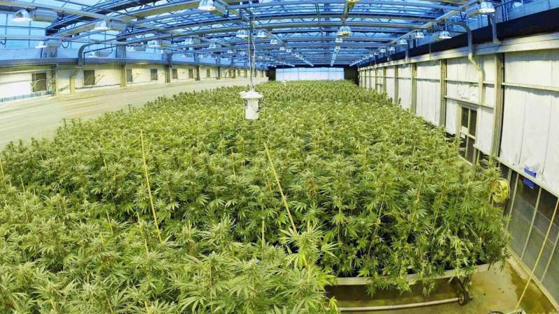 A sea change in CBD drug policy?