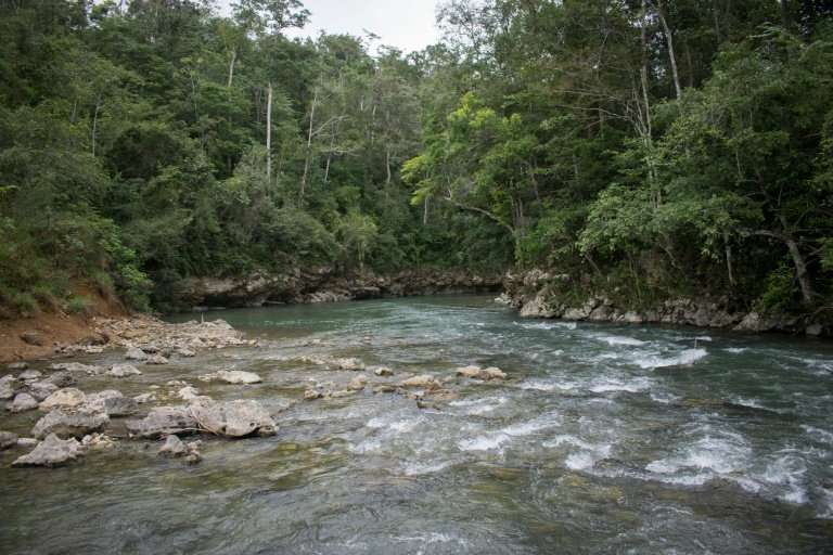 A view of forest in Guatemala's El Peten department where 60,000 Maya structures were found over the past two years using a high