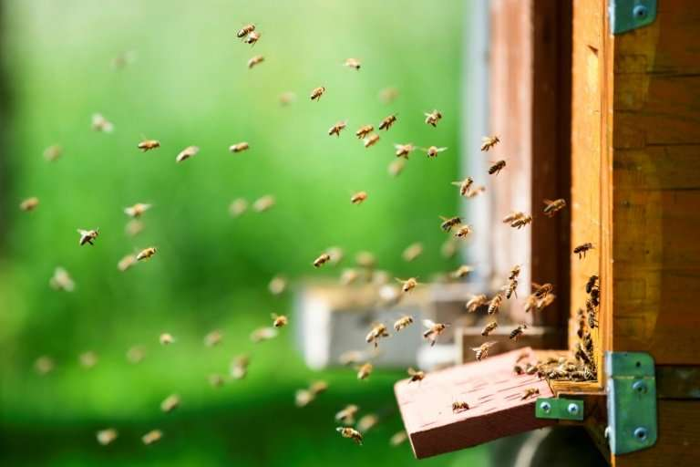 Beekeeping is a cherished national tradition in Slovenia, which has led the way in raising awareness of the plight of bees