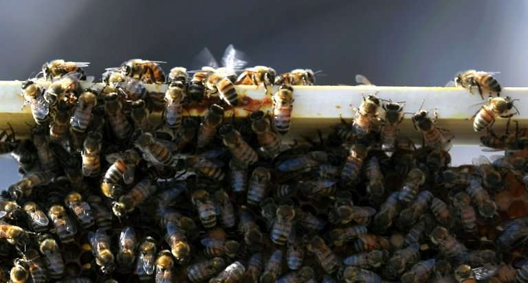Bees are helping researchers study the adverse effects of being in the centre of a big city