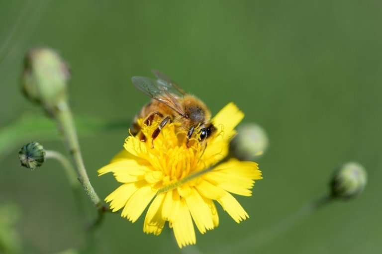 Bees are vital for growing the world's food, helping fertilise three out of four crops around the globe