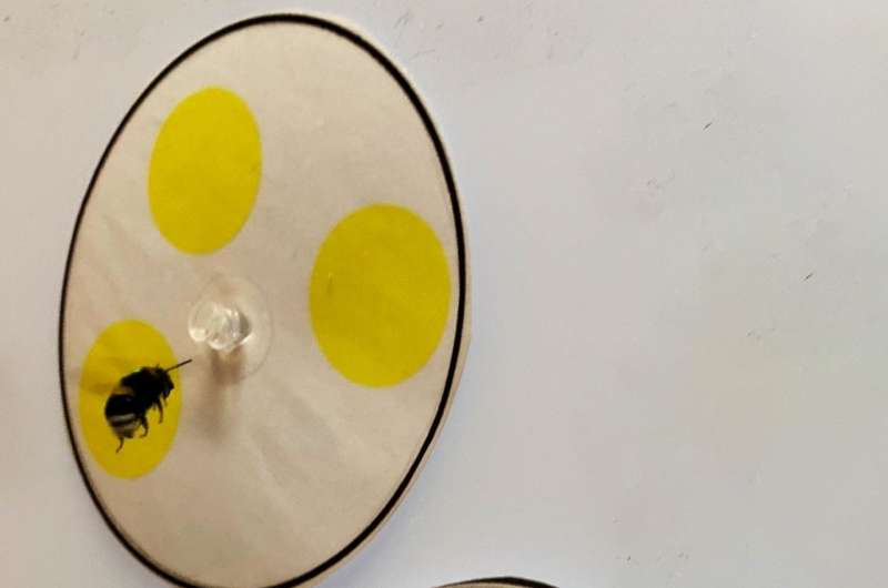 Bees can count with just four nerve cells in their brains