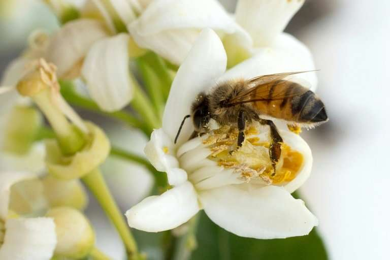 Bees help pollinate 90 percent of the world's major crops