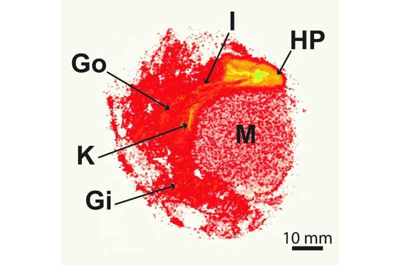 Billions of nanoplastics accumulate in marine organisms within six hours