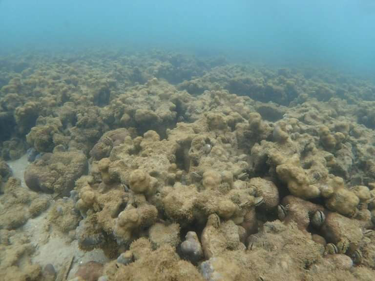 Bleaching, as suffered by this reef off Japan's Ishigaki island, is just one of the problems