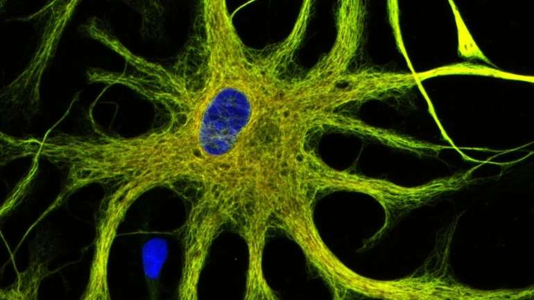 Brain's immune system may be key to better treatments for psychiatric disorders