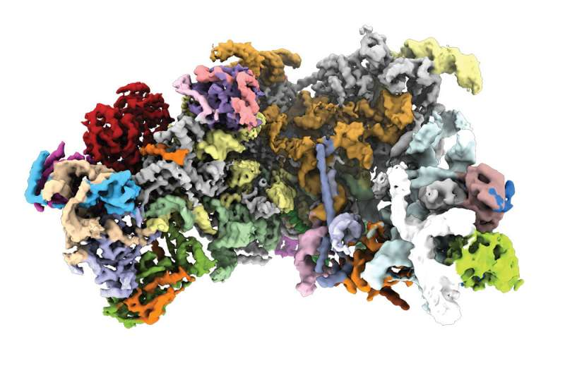 Building the machinery that makes proteins