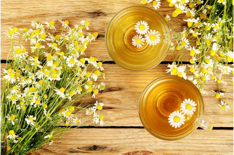 Chamomile tea may help control diabetes – as my research into 19th century dyes revealed