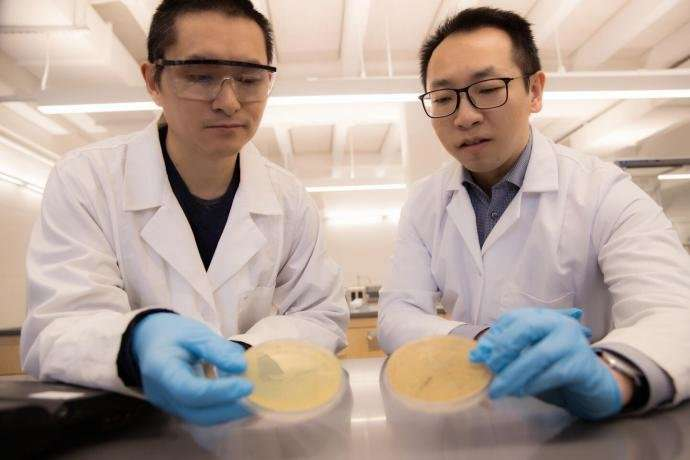 Chemical-feasting bacteria remove likely carcinogen from contaminated water