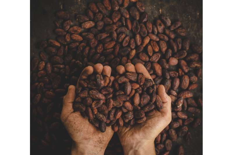 Cocoa bean roasting can preserve both chocolate health benefits, taste