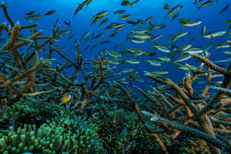 Coral reefs, like this one off the Comoros archipelago in the Indian Ocean, 'serve as natural, submerged breakwaters'