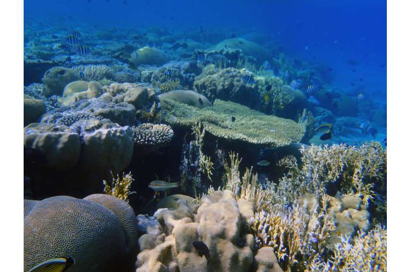 Coral skeletons act as archive of desert conditions from Little Ice Age