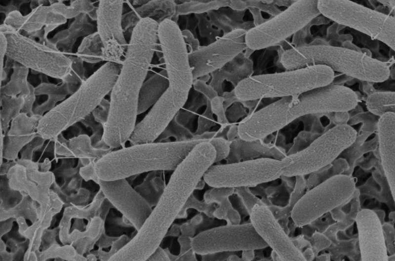 Could electricity-producing bacteria help power future space missions?