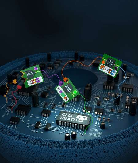 Custom Circuits for Living Cells
