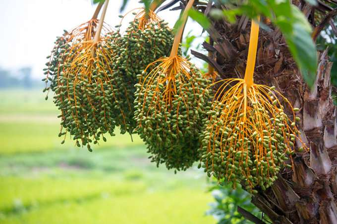 Deadly, animal-borne viruses like Nipah on the rise, researcher warns
