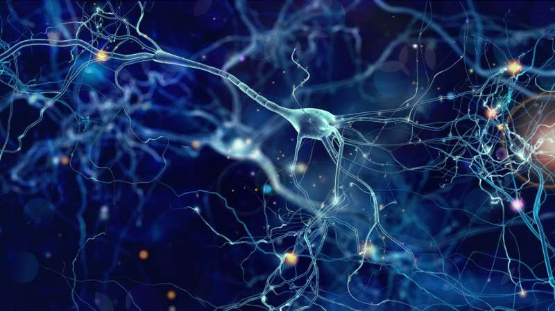 Deciphering how memory works in the brain – at the level of individual cells