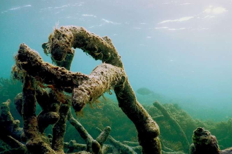Deteriorating Great Barrier Reef hushed: Young fish no longer hear their way home