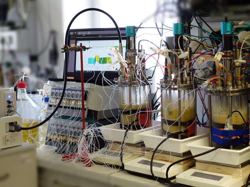 Digital penicillin production