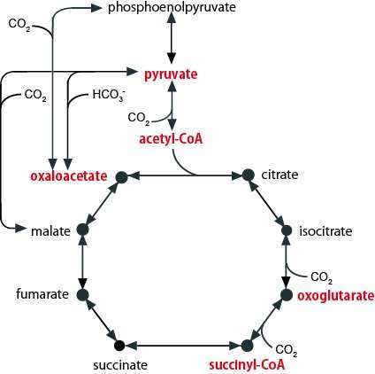 Discovery of a primordial metabolic system that gives us a glimpse of the origin of life on earth