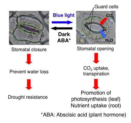 Discovery of compounds that keep plants fresh