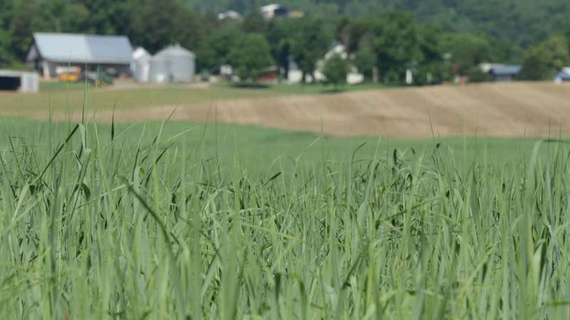 Diverse biofeedstocks have high ethanol yields and offer biorefineries flexibility