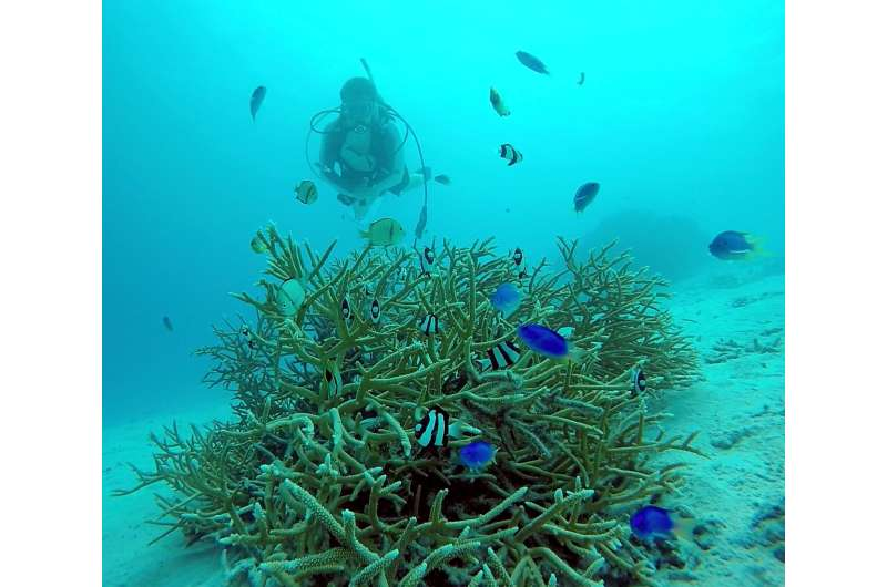 Diverse symbionts of reef corals have endured since 'age of dinosaurs'