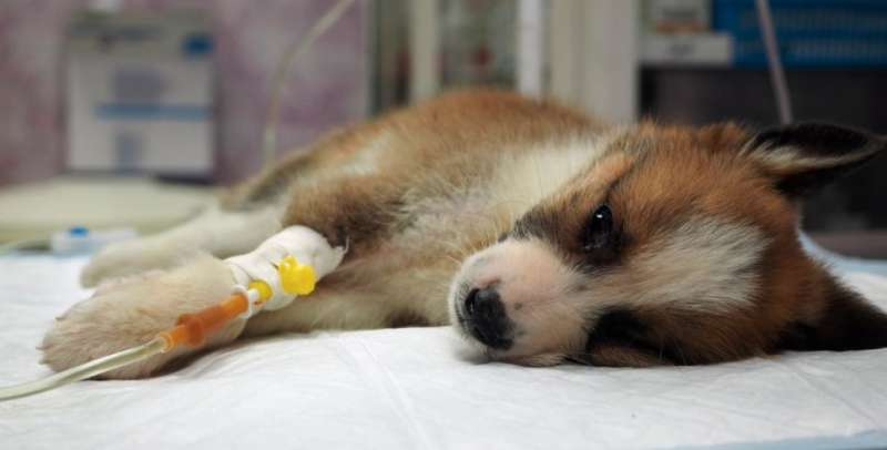 Dog paralysis condition linked to eating chicken necks