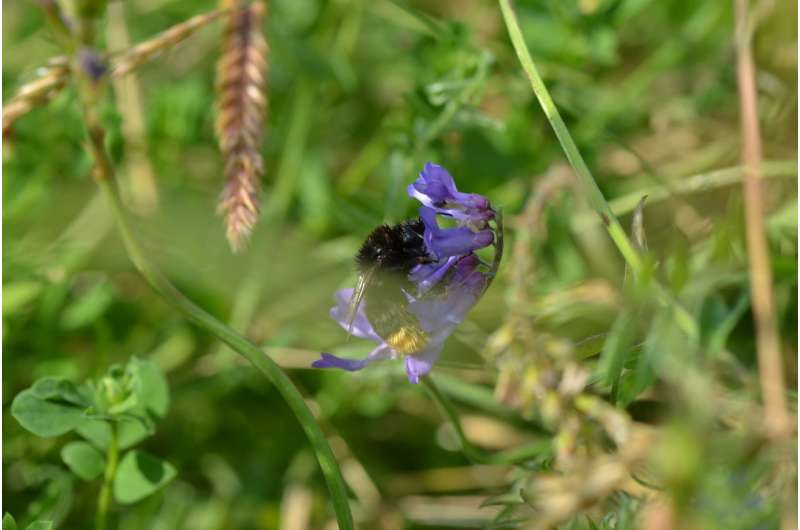 Droughts mean fewer flowers for bees