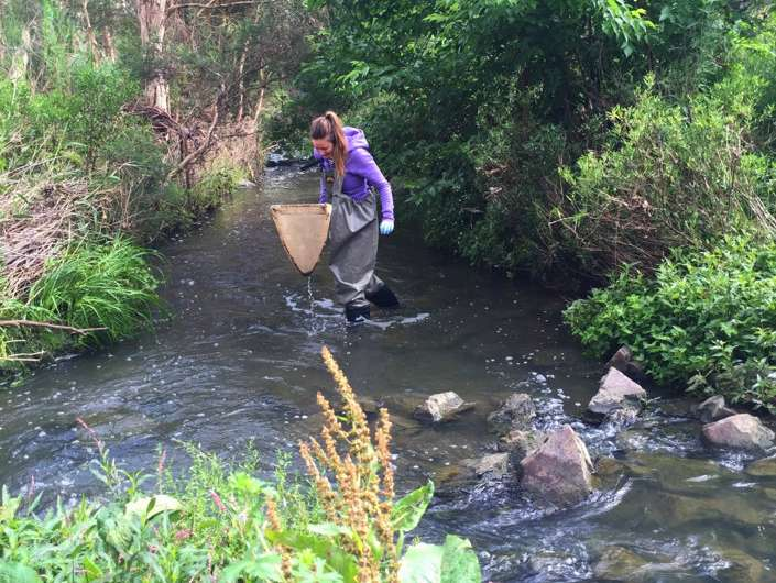 Drug pollution concentrates in stream bugs, passes to predators in water and on land