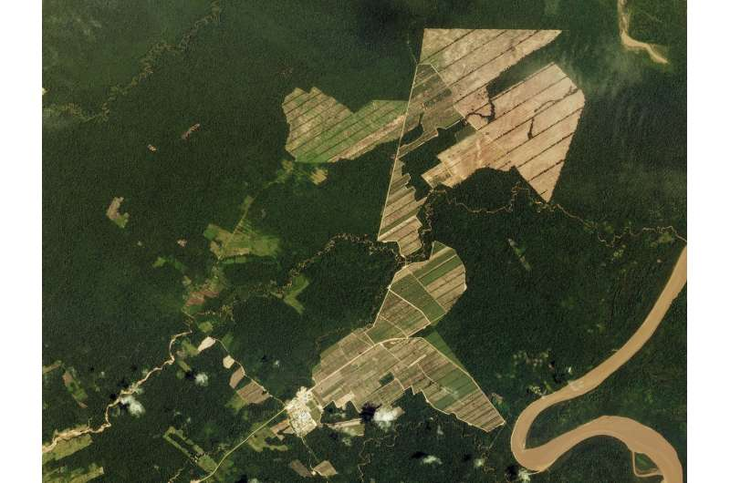 Elections may be a catalyst for deforestation, new research suggests
