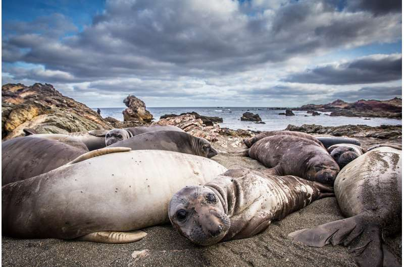 Eleven seal species narrowly escape extinction