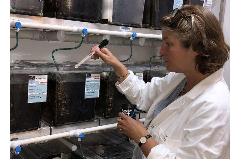 Endocrine-disrupting pesticides impair frog reproduction