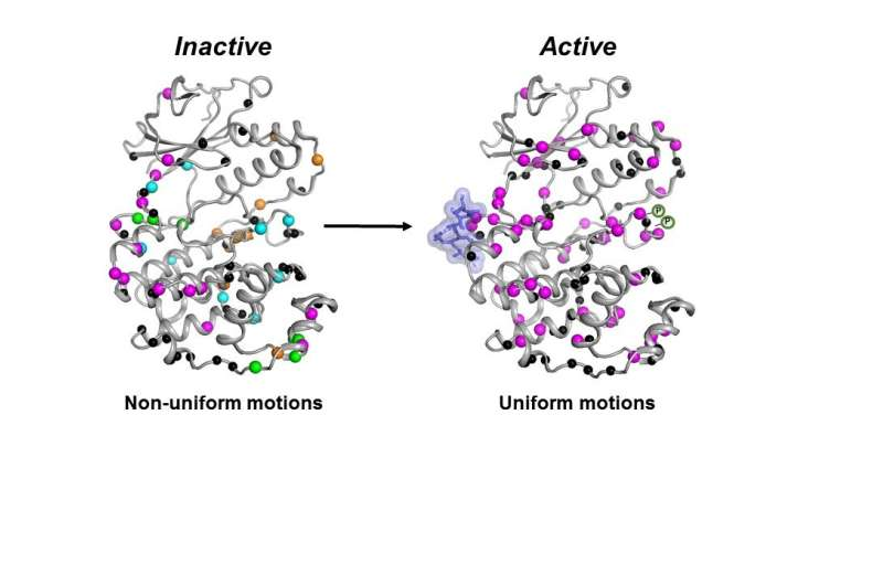 Enzyme's movement may be key to new cancer drugs