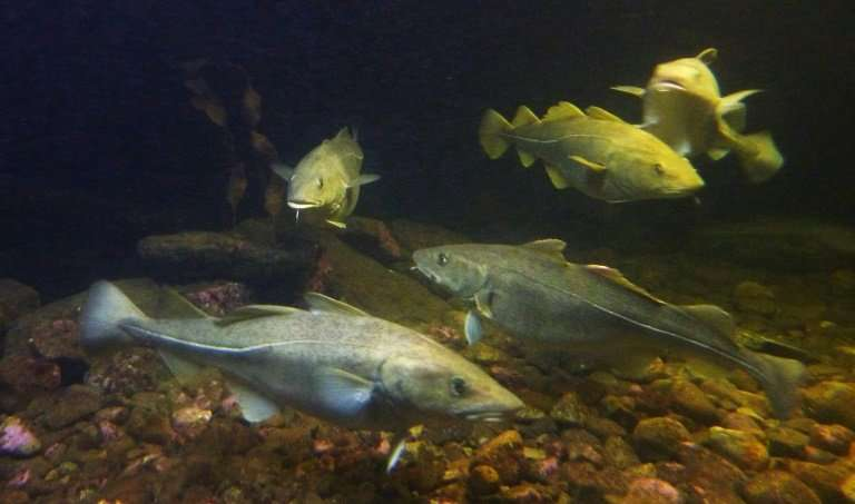 European Union  ministers meeting in Luxembourg said they were on target to protect Baltic Sea fishing communities while ensurin