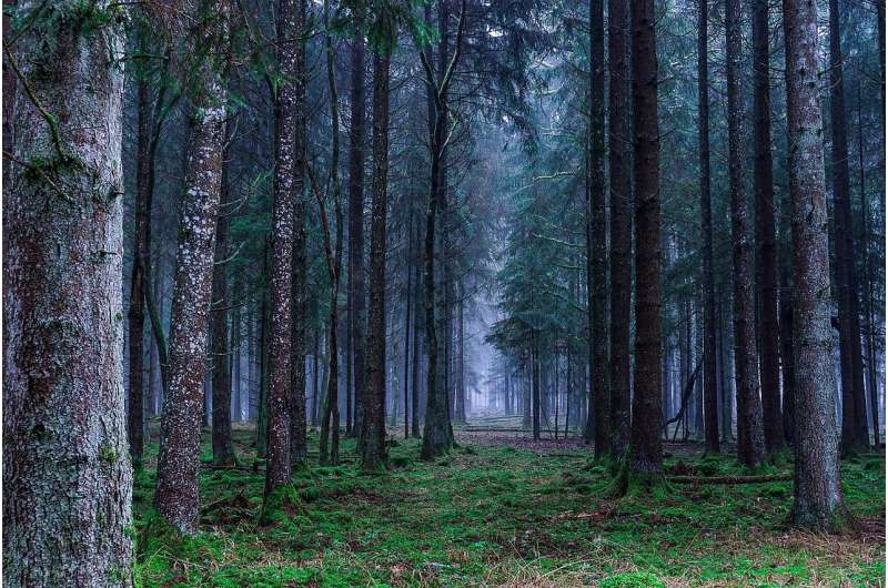 Europe's lost forests – study shows coverage has halved over six millennia
