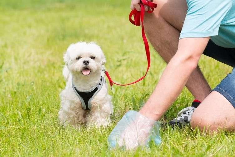 Explaining coprophagy – why do dogs eat their own poo?