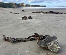 Extreme weather brings kelp rafts from the sub-Antarctic to New Zealand