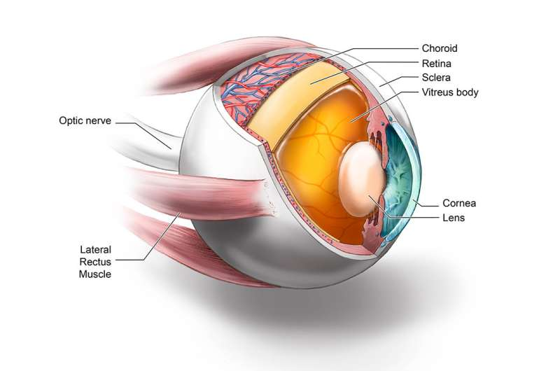 Eyes of CJD patients show evidence of prions