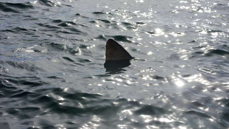 Feeding frenzy—public accuse the media of deliberately fuelling shark fear