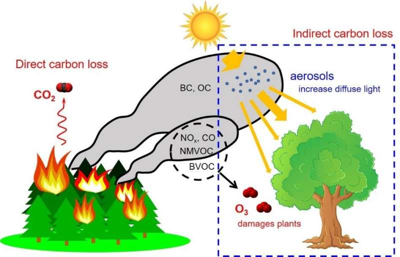 Fire air pollution weakens forest productivity