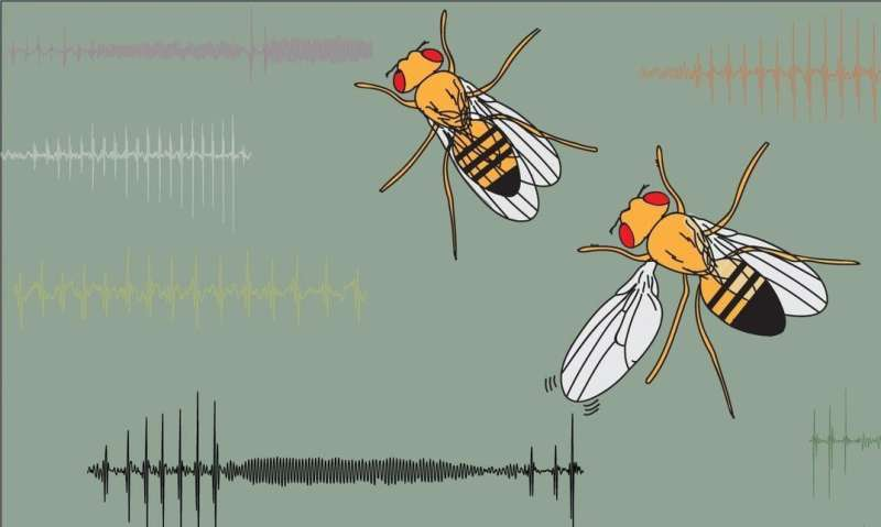 Flirting flies: More than just winging it