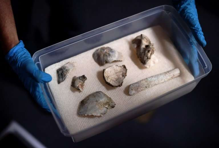 """Fragments of the oldest human fossil found within today's Brazilian borders, known as """"Luzia"""" were recovered among the"""