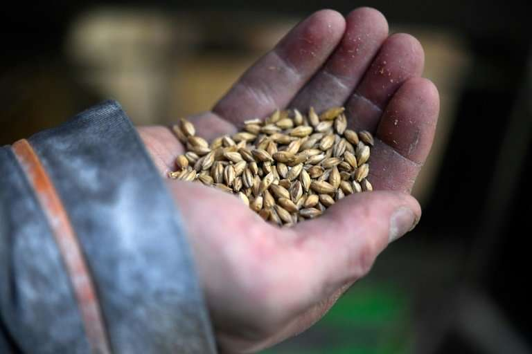 France has three of the world's five biggest producers of malt—a special mix of germinated grains used to make whisky, according