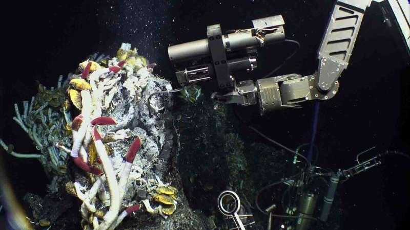 Fueling a deep-sea ecosystem
