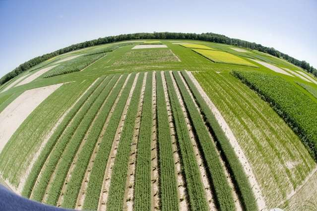 Gauging the effects of water scarcity on an irrigated planet