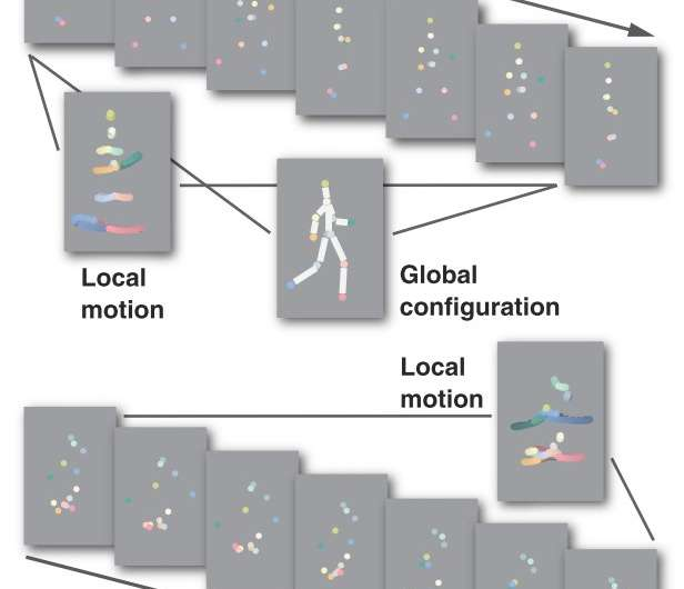 Genes contribute to biological motion perception and its covariation with autistic traits