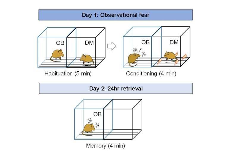 Gene variant increases empathy-driven fear in mice