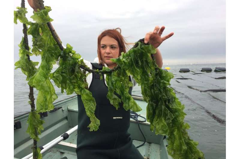 Genome of sea lettuce that spawns massive 'green tides' decoded